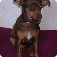 Adopt A Pet :: Copper Penny - Yucaipa, CA