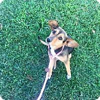 Adopt A Pet :: Lou Ann - Choudrant, LA