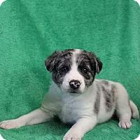 Adopt A Pet :: Coach - New Oxford, PA