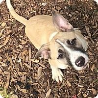 Adopt A Pet :: Moore - Gadsden, AL