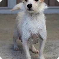 Adopt A Pet :: Tomlin - San Diego, CA