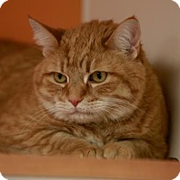 Adopt A Pet :: Marley - Kettering, OH