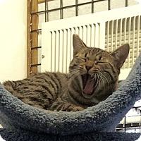 Adopt A Pet :: Sasha and Georgie - Novato, CA