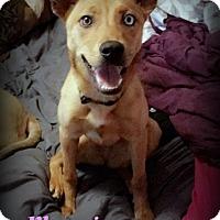 Adopt A Pet :: Phoenix - Denver, NC