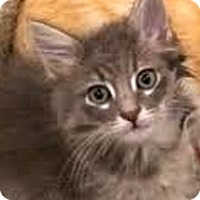 Adopt A Pet :: Cesar - LaJolla, CA