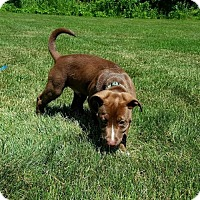 Adopt A Pet :: Mikey - Blacklick, OH