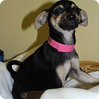 Adopt A Pet :: Flora - Waldorf, MD