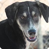 Adopt A Pet :: Grotto - Hudson, NH