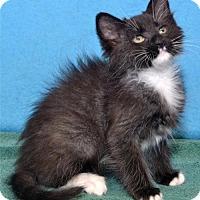 Adopt A Pet :: Muggles - Lenexa, KS