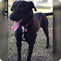 Adopt A Pet :: Hunter - Hurst, TX