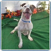 Adopt A Pet :: STEPH - Marietta, GA