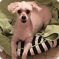 Adopt A Pet :: Snow - Lehigh, FL
