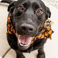 Adopt A Pet :: Dexter #2 - Yorktown, VA