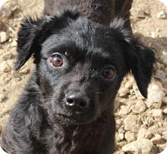 Dachshund/Terrier (Unknown Type, Small) Mix Dog for adoption in Washington, D.C. - Turtle