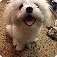 Adopt A Pet :: ACE - Hampton, VA