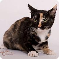 Adopt A Pet :: Priscilla - Sherman Oaks, CA