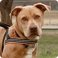Adopt A Pet :: Buddy - Greenwood, SC