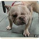 Adopt A Pet :: Gertie