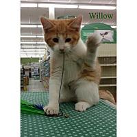 Adopt A Pet :: Willow - Warren, OH