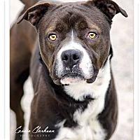 Adopt A Pet :: Frankie - Urgent! - Zanesville, OH