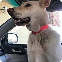 Adopt A Pet :: Nellie - Raleigh, NC