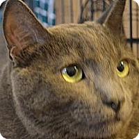 Adopt A Pet :: Toby - N. Berwick, ME