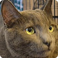 Adopt A Pet :: Toby - Sanford, ME