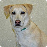 Adopt A Pet :: Dahlia - Port Washington, NY