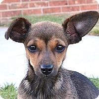 Adopt A Pet :: *Mabel - PENDING - Westport, CT
