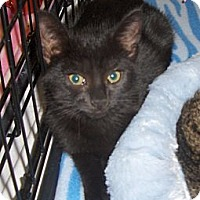 Adopt A Pet :: BooBoo - Richmond, VA