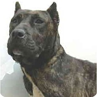 Adopt A Pet :: April - Port Washington, NY