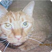 Adopt A Pet :: Rubio - Bunnell, FL