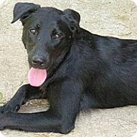 Adopt A Pet :: Jetta - Huntsville, AL