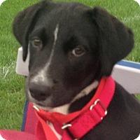 Adopt A Pet :: *Fez - PENDING - Westport, CT