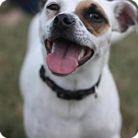 Adopt A Pet :: Hazel in Houston - Houston, TX