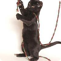 Adopt A Pet :: Caleb (Playful Flirt) - Arlington, VA