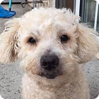 Adopt A Pet :: Jake - La Costa, CA