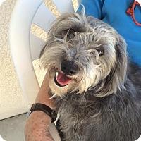 Adopt A Pet :: Patsy - Phoenix, AZ