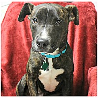 Adopt A Pet :: Toodles - Forked River, NJ