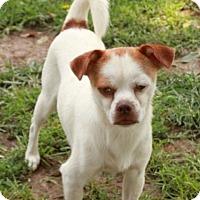Adopt A Pet :: Earl - Salem, NH