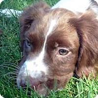 Adopt A Pet :: Wheels - Minneapolis, MN