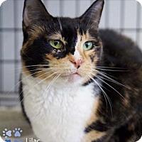 Adopt A Pet :: Lilac - Merrifield, VA