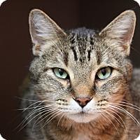 Adopt A Pet :: Simon - Sarasota, FL