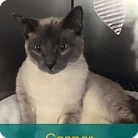 Adopt A Pet :: Casper - Royal Palm Beach, FL