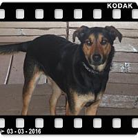 Adopt A Pet :: RYLAN - Medford, WI