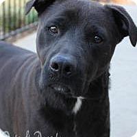 Adopt A Pet :: Blake - Yukon, OK