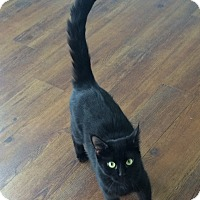 Adopt A Pet :: Jazzie - Greensburg, PA