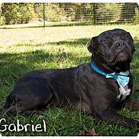 Adopt A Pet :: A -Gabriel - Portland, OR