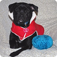 Adopt A Pet :: Kira - San Francisco, CA