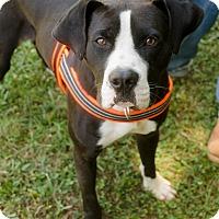 Adopt A Pet :: Dmitri - Greenwood, SC